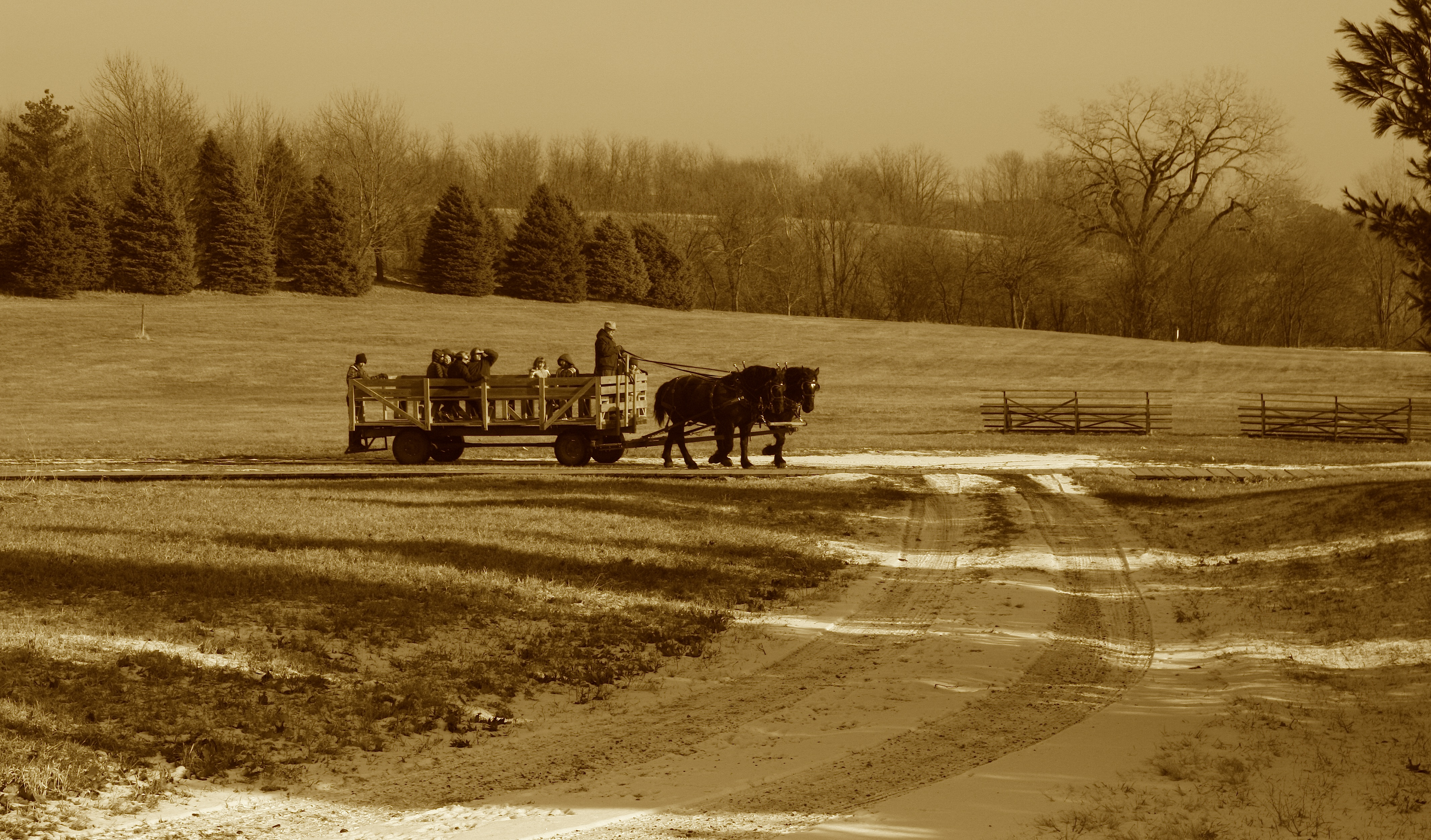 Christmas Tree Farms Iowa