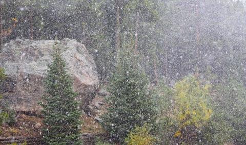 Snow 8930